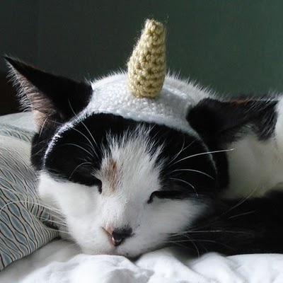 xmoonbloom kitty hat 1.jpg